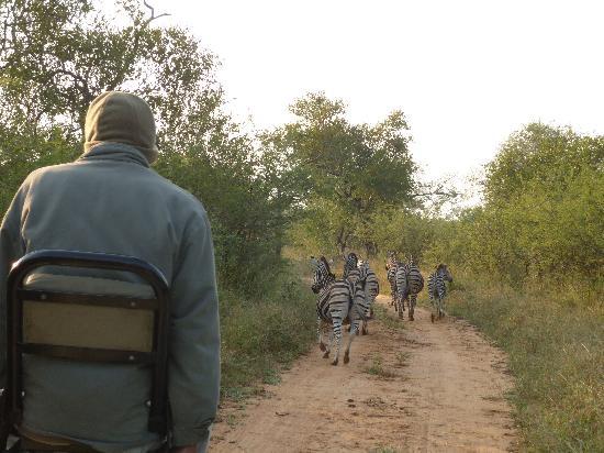 Kapama Karula: Voosi our tracker