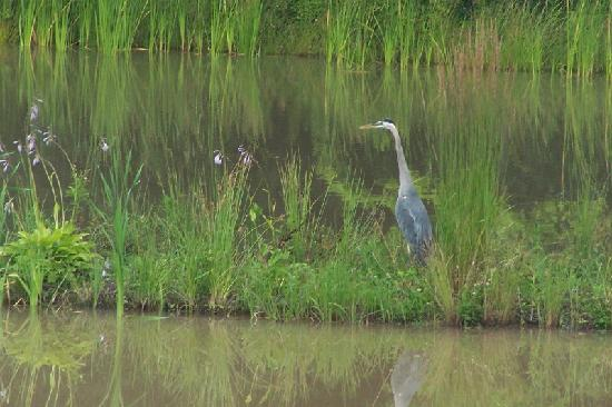 Cartland Estate Bed & Breakfast : Blue Heron