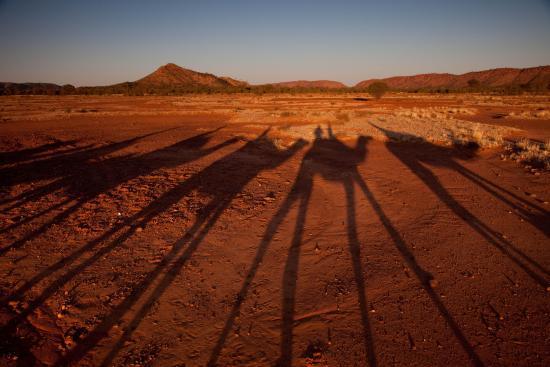 Pyndan Camel Tracks