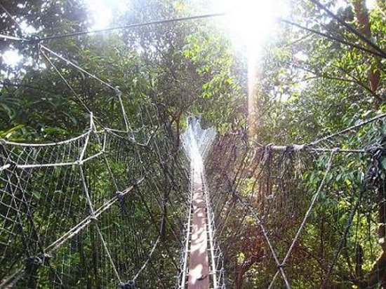 Sarawak, Malesia: Batang Ai Forest Hanging Bridge