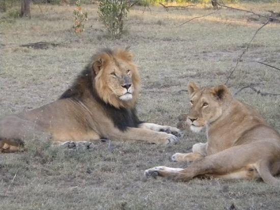 Porini Mara Camp: Simba's - male and female relaxing