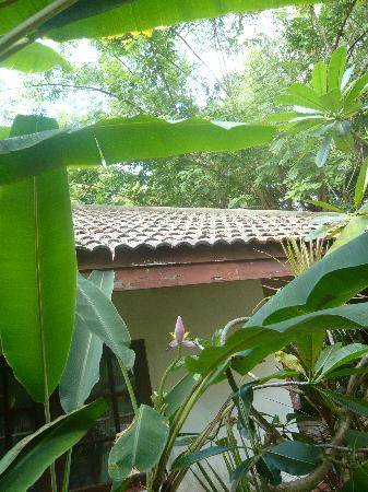 Tropica Resort and Restaurant: banana flower out of our Bungalow´s window, my 1st time see a banana flower!!!