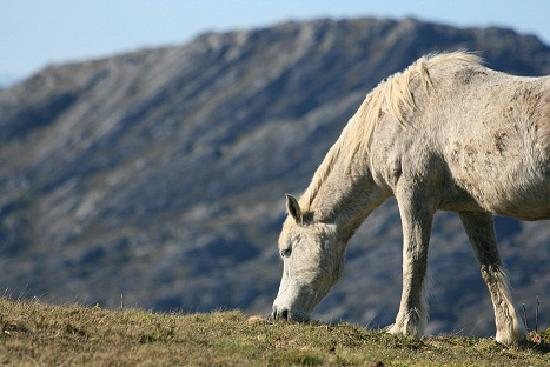 West Cork Day Tours: Wild Horse, Ring of Beara