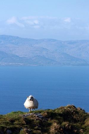 West Cork Day Tours: Sheeps Head Walk