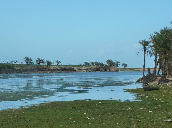 Socotra Island, Yemen: laguna e palmeto