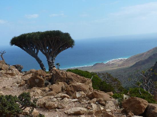 Socotorá, Iêmen: un classico: albero del sangue di drago