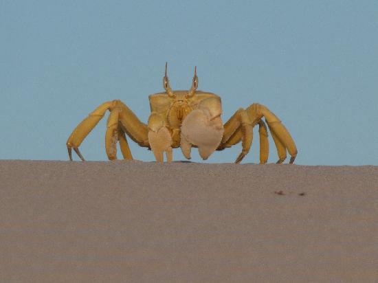Socotra Island, Yemen: ospiti in spiaggia