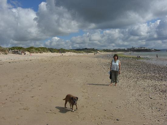 Are Dogs Allowed On Manorbier Beach