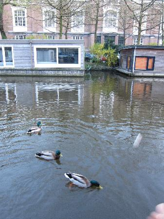 PhilDutch Amsterdam Bed and Breakfast: Feeding the ducks outside our window