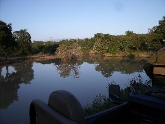 Monwana Game Lodge: Views in the Thornybush