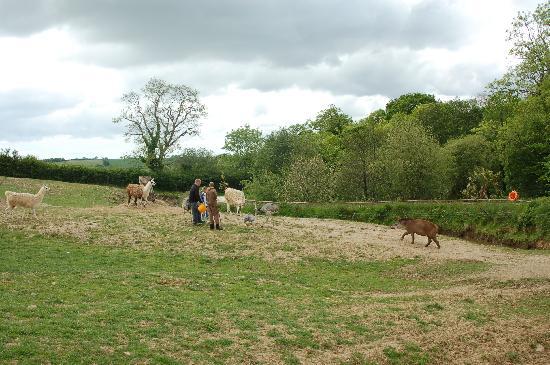 Manor Wildlife Park: They've got food, follow me!