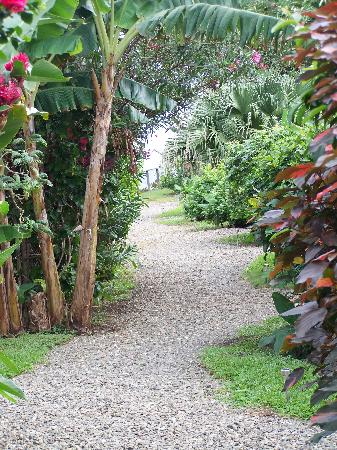 Hotel Jamaican Colors: Path leading from the parking lot past the bungalows and restaurant...