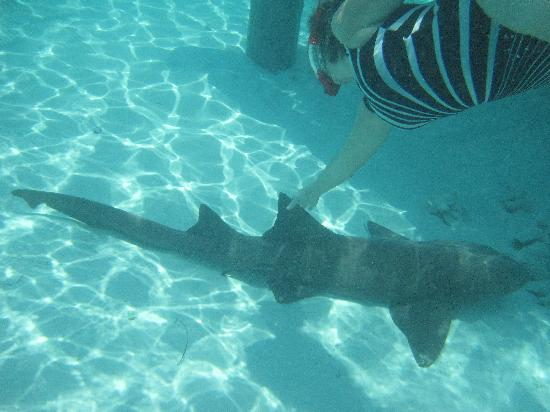 Robert's Island Adventures: swimming with the sharks