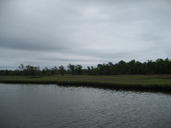 Croatan National Forest: Tidal marsh walk by the campsite