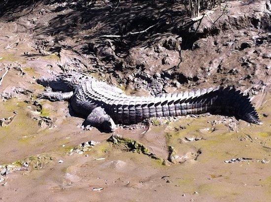 Whitsunday Crocodile Safari: Lenny