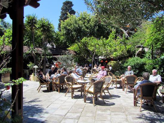 Socratous Garden: Garten