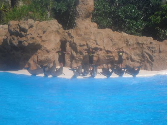 Loro Parque: Dolphins