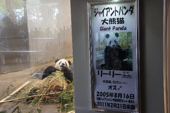 Ueno Zoo : ゴロンとして食事中…。