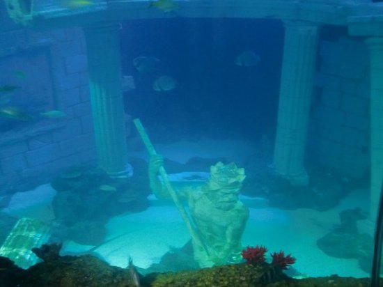 SEA LIFE Porto: The god of the seas