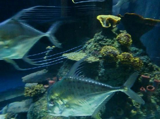 SEA LIFE Porto: Electric fish