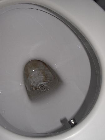 Hotel Garden of Eden: Toilet....