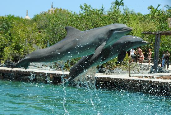 Iberostar Tucan Hotel : Swimmng with dolphins at Xel Ha