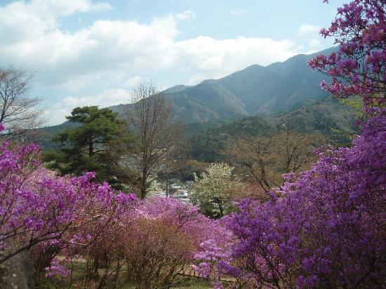 Ryokan Fujioto: Mountain Azalea park in nearby Nagiso