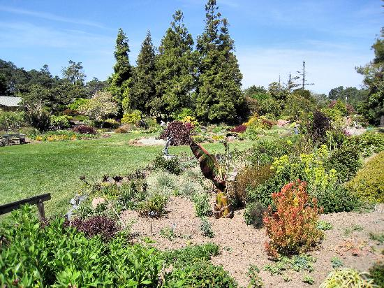 Mendocino Coast Botanical Gardens: Perennial garden