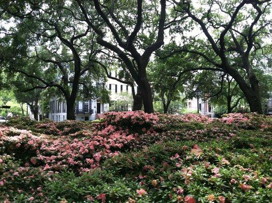 Savannah, GA: Pulaski Square
