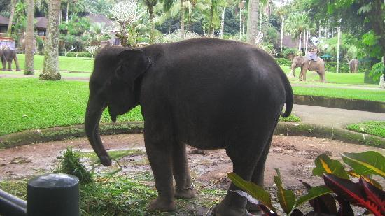 Elephant Safari Park & Lodge : baby