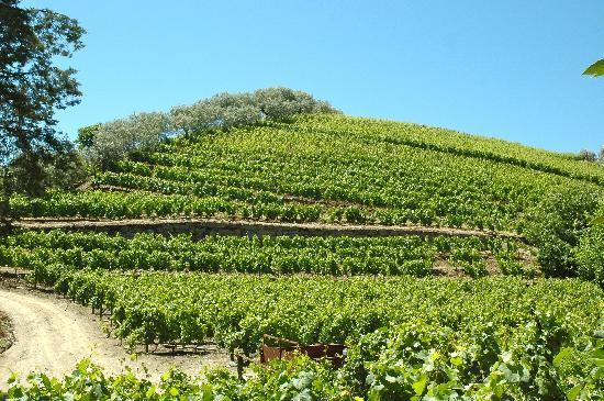 Casa da Azenha: Wine Yards