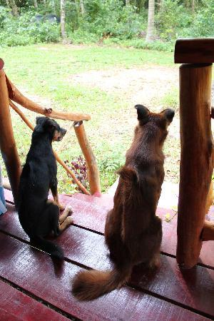 Ko Kradan, Thailand: Two of the resident dogs keep me company