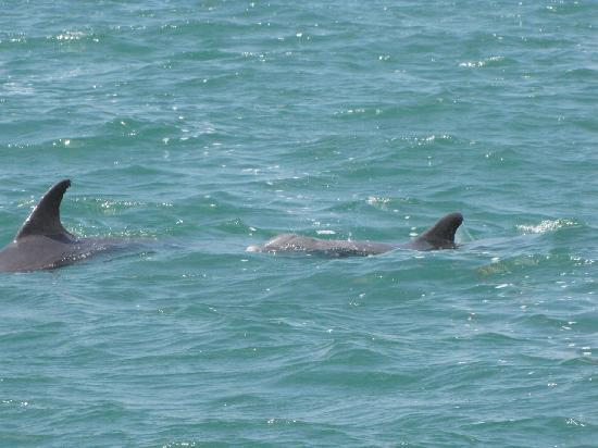 Ocean Force Adventures Dolphins We Saw Near Key Biscayne