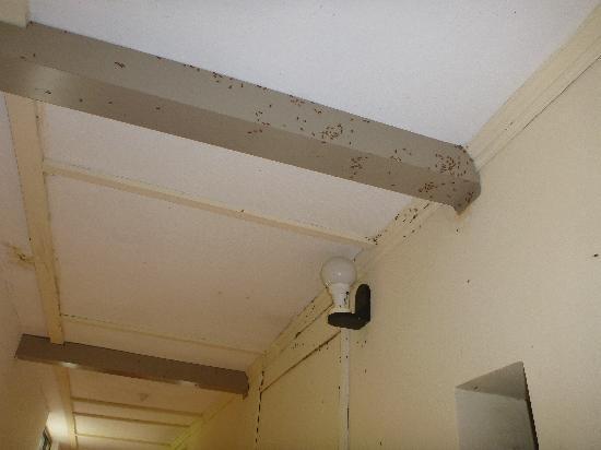 Palm Village Hotel: Bug infestation.