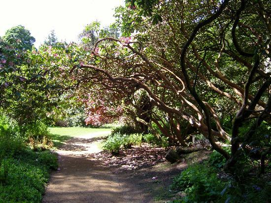 Belsay Hall and Gardens: Fabulous walk through the gardens