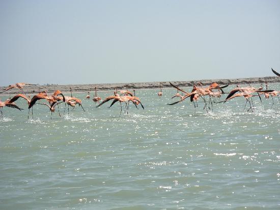 Mayan Ecotours : flamingos al vuelo