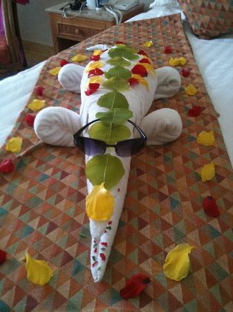 Sol Dahab Red Sea Resort: croc made in return!