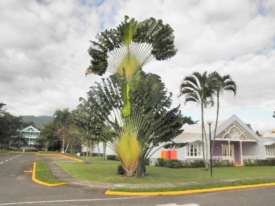 Puerto Plata Village: einzigartige palmen