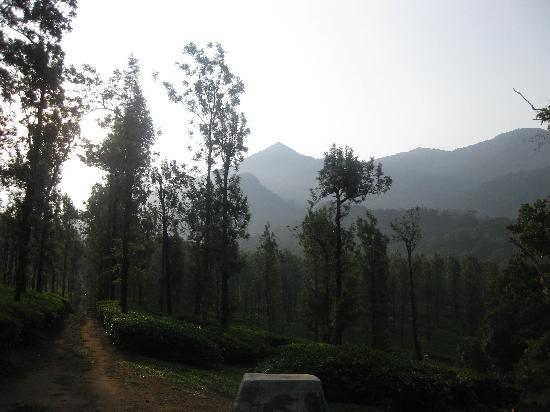 Annapara Home Stay: Chembra Peak