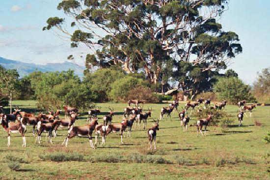 Bontebok National Park: Provided by: SANParks