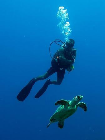 Marko's The Parrotfish Dive Center : Fun