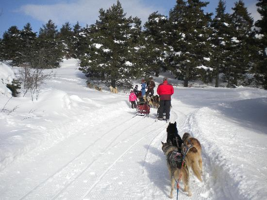 Gite de la colle saint Michel : Ballade en traineau à chiens l'hiver