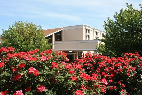 Holiday Inn Roanoke Valley View: Roses are in Bloom!
