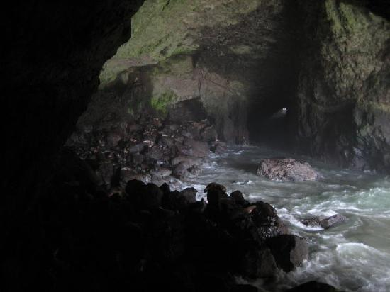Sea Lion Caves: Cave 1