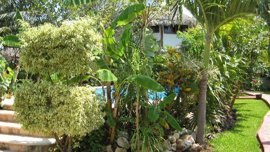 Hotel Casa Barbara: Gardens