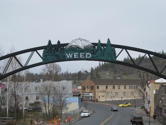 Welcome to Weed, California