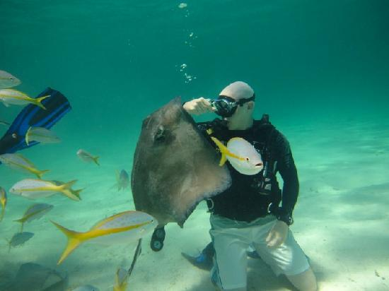 Stingray City Is A Must Do Foto Van Living The Dream Divers Seven Mile Be