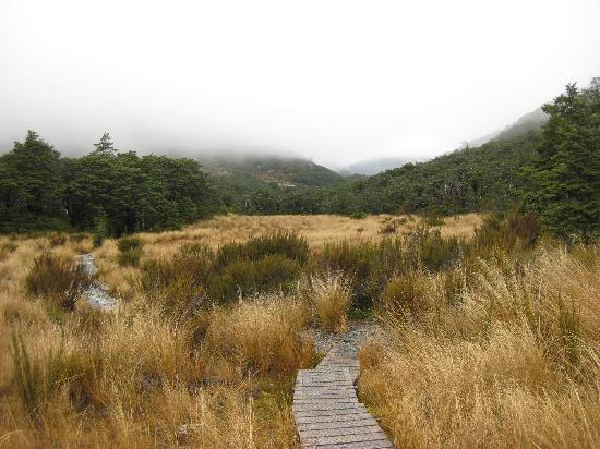 Arthur's Pass Hiking & Tranz Alpine One Day Tour: Walkway through Tussock Grass