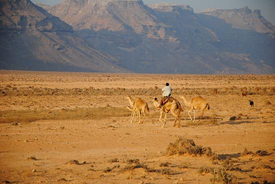 Sanaa, Jemen: Désert-Socotra