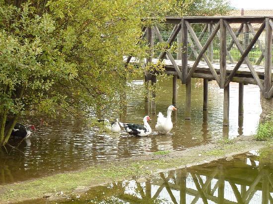Quinta das Mineirinhas: Lago